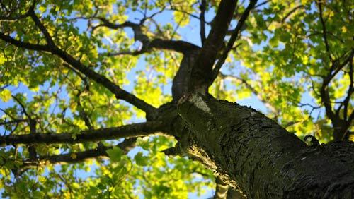Risultati immagini per alberi nella pianura padana