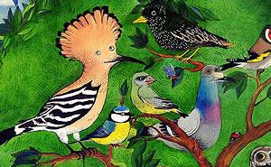 scopri quali uccelli puoi vedere nel tuo birdgarden