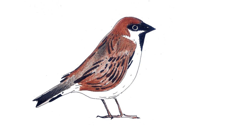 Quali Uccelli Puoi Vedere Nel Tuo Birdgarden Lipu Onlus