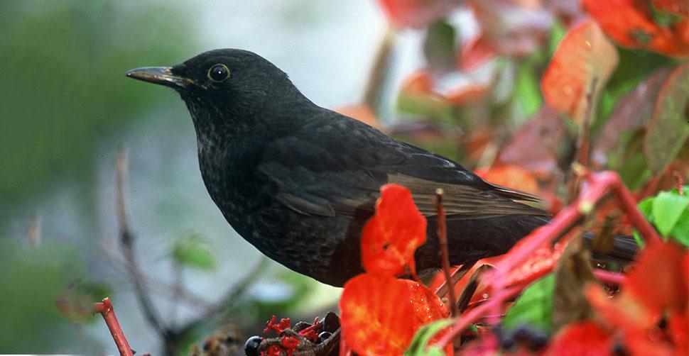 5 bellissimi uccelli comuni che puoi vedere in primavera lipu onlus - Insetti piccolissimi neri nel letto ...