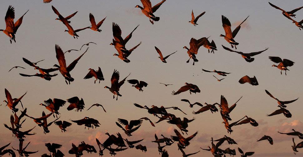 Risultati immagini per uccelli sterminati in veneto