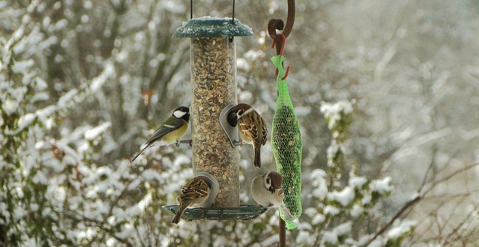 Ben noto Che fine fanno gli uccelli in inverno? - Lipu Onlus TW49