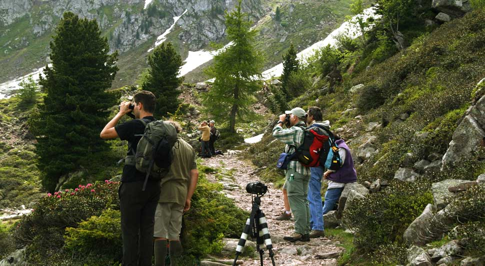 Birdwatching in montagna (foto: M. Lambertini)