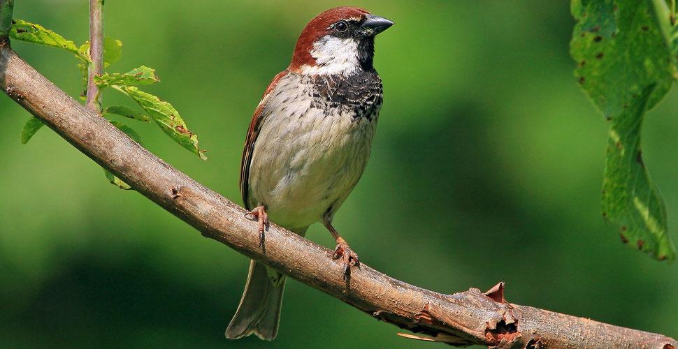 5 bellissimi uccelli comuni che puoi vedere in primavera - Primavera uccelli primavera colorazione pagine ...