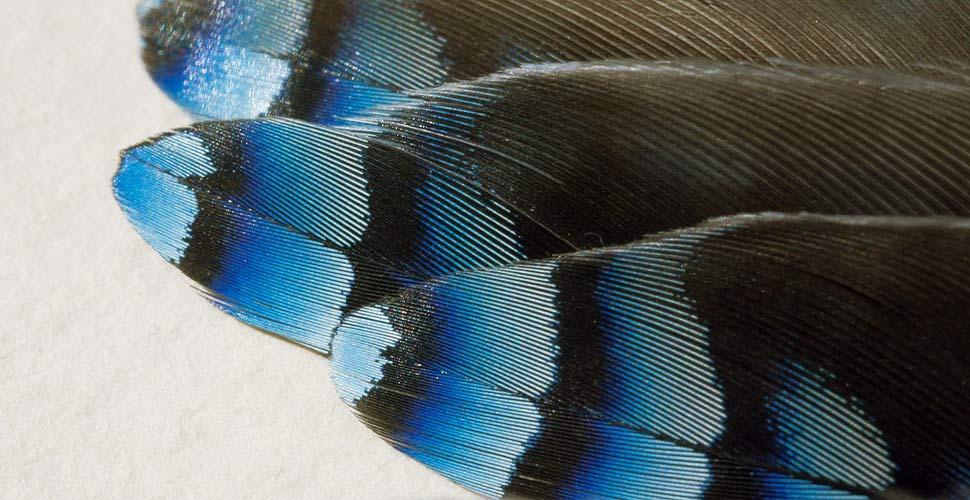 Schema Elettrico Richiamo Per Uccelli : Motivi per cui devi fare birdwatching in primavera