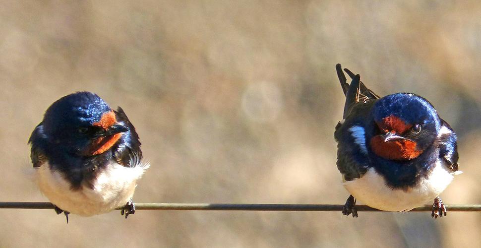 Il mondo degli animali: protagonisti sono gli uccelli 5