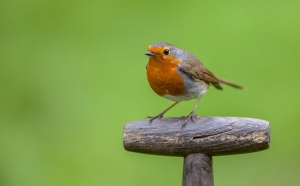 iniziare a fare birdgarden