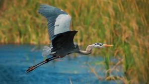Le nuove linee guida per Rete Natura 2000