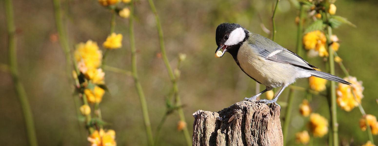 Fai un gesto che parla del tuo amore per la natura