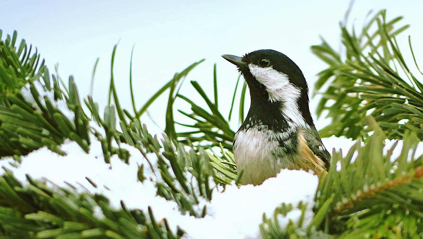 Iscriviti, aiuti la natura per un anno