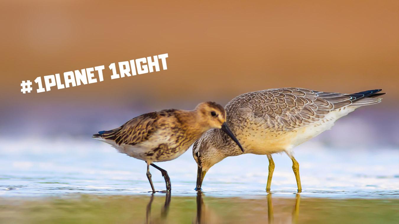 Chiediamo che la natura diventi un Diritto Umano universale